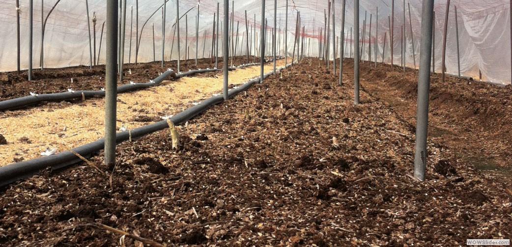 1ハウスに1トンの堆肥を2月に入れます。